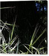 Wild Grass In The Sunlight Canvas Print