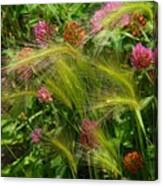 Wild Grasses And Red Clover Canvas Print