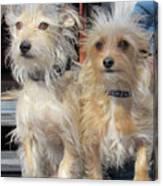 Wild Hair Dogs Canvas Print