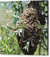 Wild Honey Bees Canvas Print