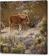 Wild Horse At Cold Creek Canvas Print