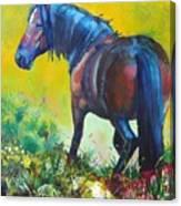 Wild Horse On Dartmoor - Roaming Free Canvas Print