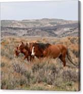 Wild Horse Trio Canvas Print