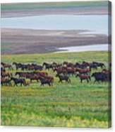 Wild Horses #34 Canvas Print