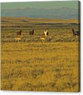 Wild Horses And Antelope-signed-#2216 Canvas Print