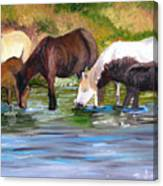 Wild Horses At The Watering Hole Canvas Print