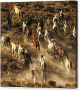 Wild Horses Gone Wild Canvas Print