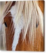 Wild Horses In Wyoming Canvas Print