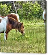 Wild Horses Of Assateague 5 Canvas Print