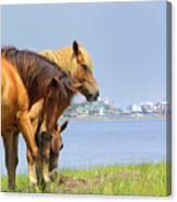 Wild Horses Of Assateaque Canvas Print