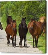 Wild Horses Of Corolla Canvas Print