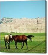 Wild Horses Of South Dakota Canvas Print