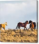 Wild Horses On The Bisti Canvas Print