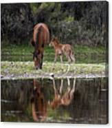 Wild Horses Reflected In The Salt River Canvas Print