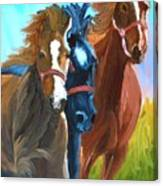 Wild Horses Running  Canvas Print