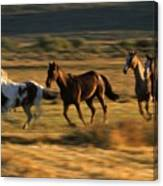 Wild Horses Running Together Canvas Print