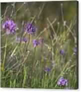 Wild Hyacinth At Sunset Canvas Print