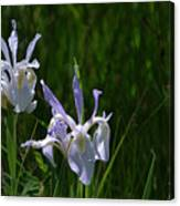 Wild Iris 4 Canvas Print