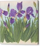 Wild Irises Canvas Print