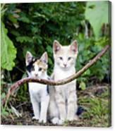 Wild Kats Canvas Print