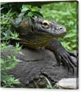 Wild Komodo Dragon Crawling Through Nature Canvas Print