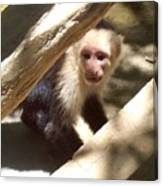 Wild Little Monkey Canvas Print