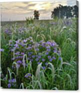Wild Mints And Foxtail Grasses At Glacial Park Canvas Print