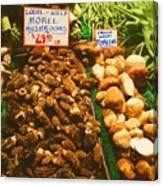 Wild Morell Mushrooms Canvas Print