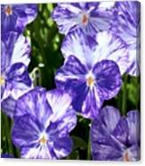 Wild Mountain Flowers Canvas Print