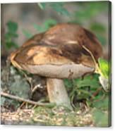 Wild Mushroom Canvas Print