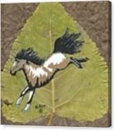 Wild Mustang #3 Canvas Print