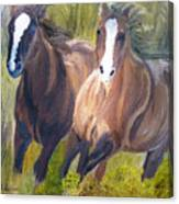 Wild Mustangs Canvas Print