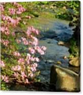 Wild Piedmont Azalea 4 Canvas Print