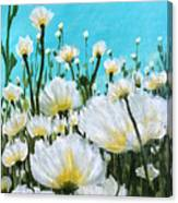 Wild Poppies  Canvas Print