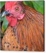Wild Rooster Canvas Print