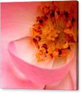 Wild Rose Bowl  Canvas Print