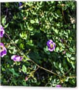 Wild Rose Habitat Canvas Print