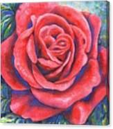 Wild Rose Three Canvas Print