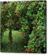 Wild Rosehips Canvas Print