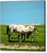Wild South Dakota Canvas Print