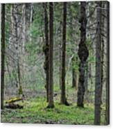 Wild Spring Forest Canvas Print