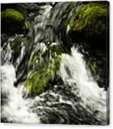Wild Stream Of Green Moss Canvas Print
