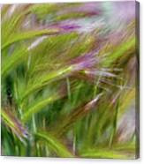 Wild Summer Grass Canvas Print