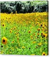 Wild Sunflowers Canvas Print
