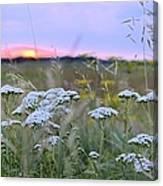 Wild Sunrise Canvas Print