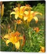 Wild Tiger Lilies Canvas Print