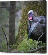 Wild Turkey Great Smoky Mountains National Park Canvas Print