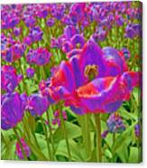 Wild Version Pink And Purple Tulips Canvas Print