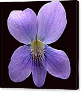 Wild Violet On Black Canvas Print