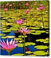 Wild Water Lilies 3 Canvas Print